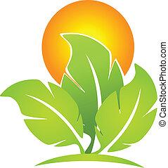 Green eco-leafs and sun logo
