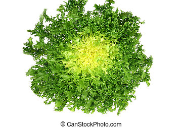 Green endive - Leaf vegetable - green endive (Cichorium...