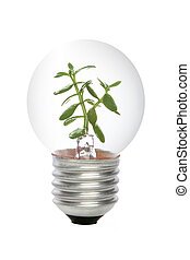 green energy concept, lightbulb with plant growing inside