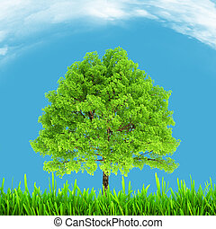Green environment and tree on blue sky