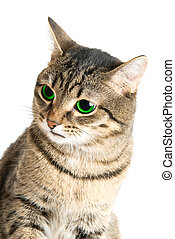 Beauty Cat with green eyes on white