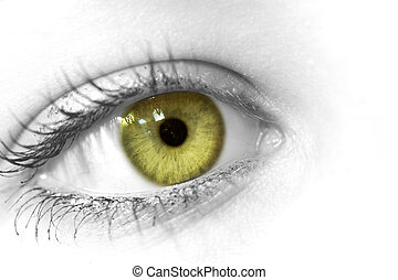Close-up of a female eye