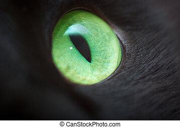 Green eye of a black cat.
