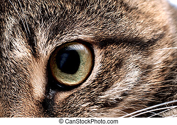 Green eye of a gray cat close up