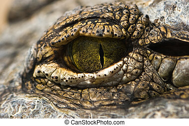 Green eye of crocodile in close view