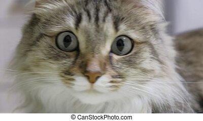 Green eyes kitten hunter. Face closeup. Macro