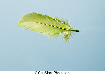 Green feather in the blue sky - Green feather falling in the...