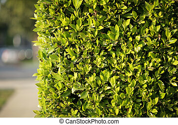 Green fence background
