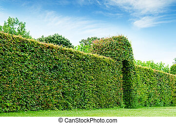 green fence in a summer park and blue sky