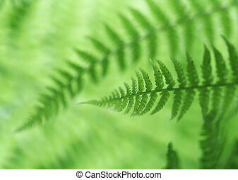 Green Fern Abstract Background