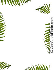 Green Fern Abstract - Abstract design of segments of six...