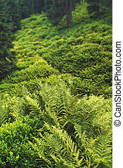 green fern and moss in the forest