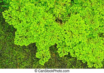 Green fern.
