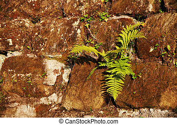 Green fern growing in the middle of a stone wall