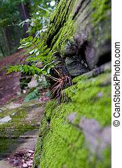 green fern growing on a rock