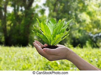 Green fern in hands on tropical nature summer background, Ecology and Environment concept