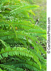 Green fern in the nature