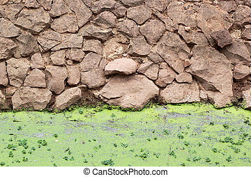 Green fern in the nature - stone wall