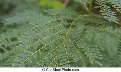 Green fern in tropical climate - Closeup of green fern in...