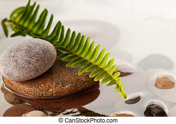 green fern leaf on river rocks in water