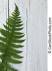 Green fern leaf on textured white wood