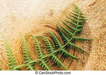Green fern leaf on the tree stump