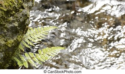 Green fern leaves above the sparkling brook water