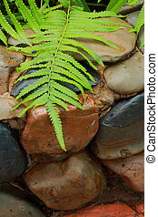 Green fern leaves on the rock