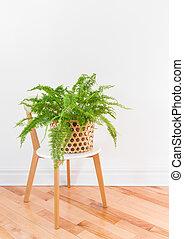 Green fern plant in a basket on a stylish chair