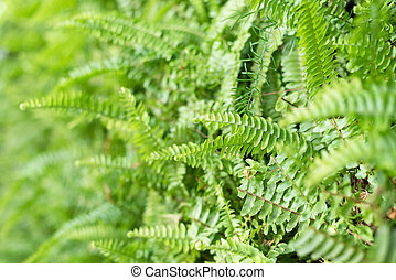 green fern with leaves on the wall