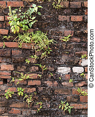 green fern with old brick wal