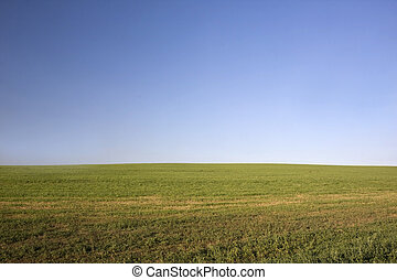green field after hay harvest and blue sky