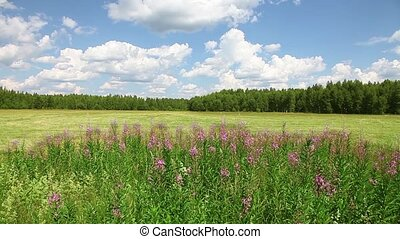 Green field and blue sky with wild flowers in the foreground