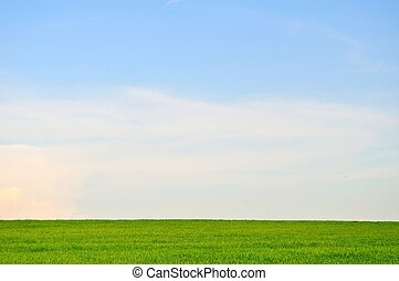 Green field and blue sky landscape