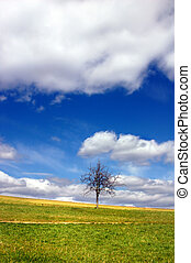 Green field and lonely tree against blue sky and clouds
