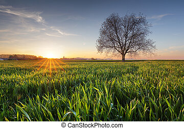 Green field at sunset with tree