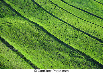 Green field background, spring theme