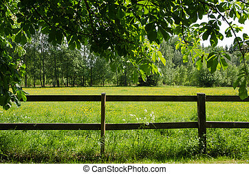 Green field behind a fence