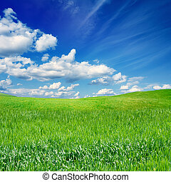 Green field, blue sky - Beautiful nature eco background -...