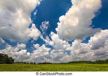 Green Field Blue Sky in Summer