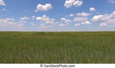 green field blue speedy sky