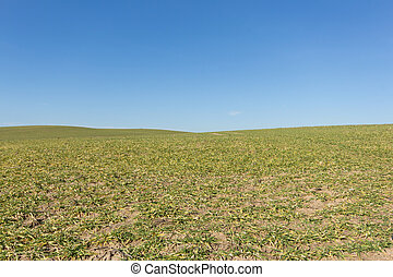green field , clear blue sky , rural landscape background