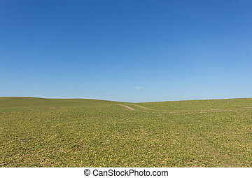 green field , clear blue sky , rural landscape background