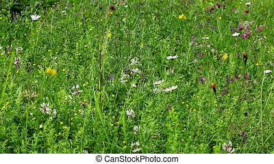 Green field flowers - Background view of various green field...