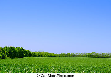 Green Field, Forest and Blue Sky. Summer Landscape Background