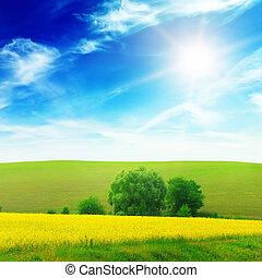 Green field illuminated by sunlight