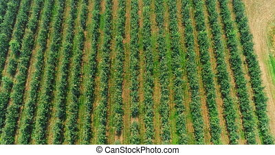 Green field in countryside 4k