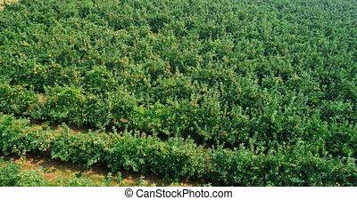 Green field in countryside 4k - Green field in countryside ...