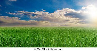 green field in summer, landscape field in the setting sun
