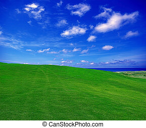 green field in the summer